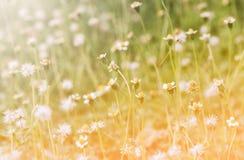 Трава цветка Стоковое фото RF