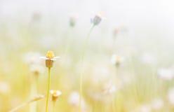 Трава цветка Стоковое Изображение
