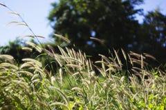 Трава 02 цветка Стоковое Изображение