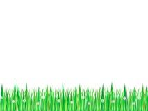 трава цветков Стоковые Изображения