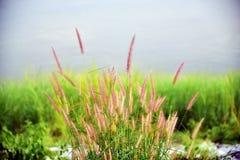 Трава цветков стоковые фото