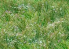 трава цветков Стоковое Изображение