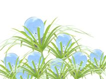 трава шарика Стоковые Изображения RF