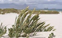 Трава дюны Стоковое Изображение RF