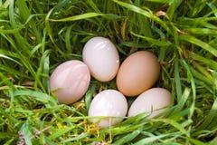 трава яичек Стоковое Фото