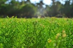 Трава для предпосылки Стоковое Фото