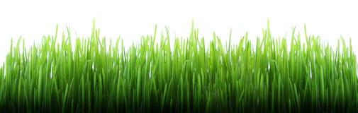 трава длиной Стоковые Изображения