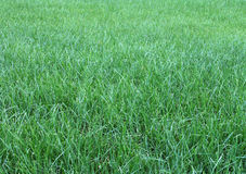трава Стоковые Изображения