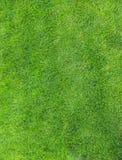 трава Стоковое фото RF