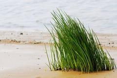 трава Стоковое Фото