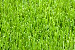 трава Стоковая Фотография RF