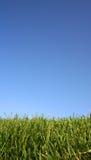 трава Стоковые Фото