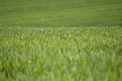 Трава Стоковые Изображения RF