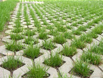 трава Стоковое Изображение