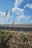 Трава. Стоковая Фотография RF