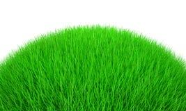 трава 3d Стоковая Фотография RF