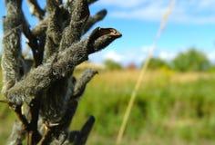 трава 2 Стоковое Изображение RF