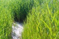 Трава 5 Стоковое Фото