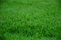 Трава Стоковые Фотографии RF