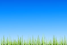 трава иллюстрация вектора