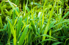 1 трава Стоковое Изображение RF