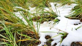 1 трава Стоковые Изображения RF