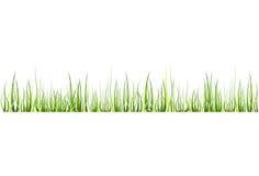 трава иллюстрация штока