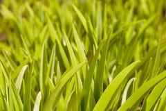 трава 01 Стоковые Фотографии RF