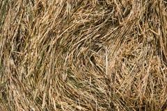 трава backgound сухая Стоковое Изображение