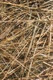трава backgound сухая Стоковые Фотографии RF