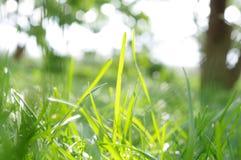 трава backlight стоковые фотографии rf