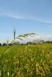 трава barnyard Стоковая Фотография RF