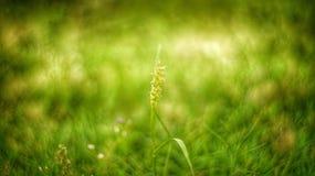 Трава Bokeh стоковое изображение rf