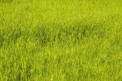 Трава Brght зеленая Стоковые Изображения