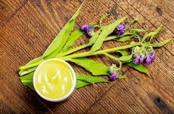 Трава Comfrey - officinale Symphytum стоковое фото