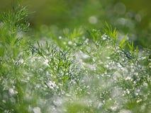 трава dewdrops стоковое фото