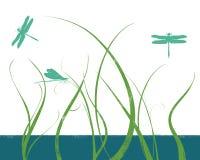 трава dragonflies Стоковая Фотография