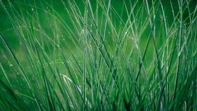 Трава Gren Стоковые Фотографии RF