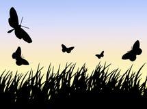 трава n бабочек Стоковое Фото