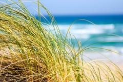 Трава Reet двигая в ветер с океаном, пляжем и волнами на заднем плане на залив устрицы, Южную Африку Стоковая Фотография
