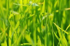 трава sunlit Стоковая Фотография RF