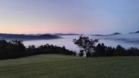 Трава tres природы утра тумана Стоковое Изображение
