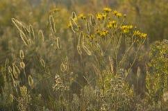 Трава Wildflowers Стоковая Фотография