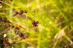 Травинка на предпосылке природы конспекта луга Стоковое фото RF