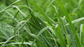 Травинки пошатывая к ветру акции видеоматериалы