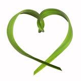 Травинки, форма сердца Стоковое Фото