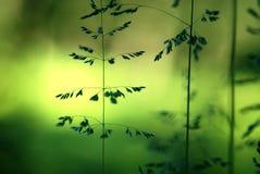 Травинки Стоковые Изображения RF