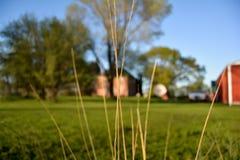 Травинки Стоковые Фото