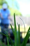 травокосилка Стоковое Изображение RF