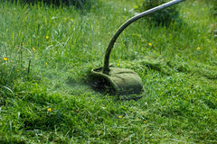 Травокосилка косит зеленую траву и цветки к день Стоковое фото RF